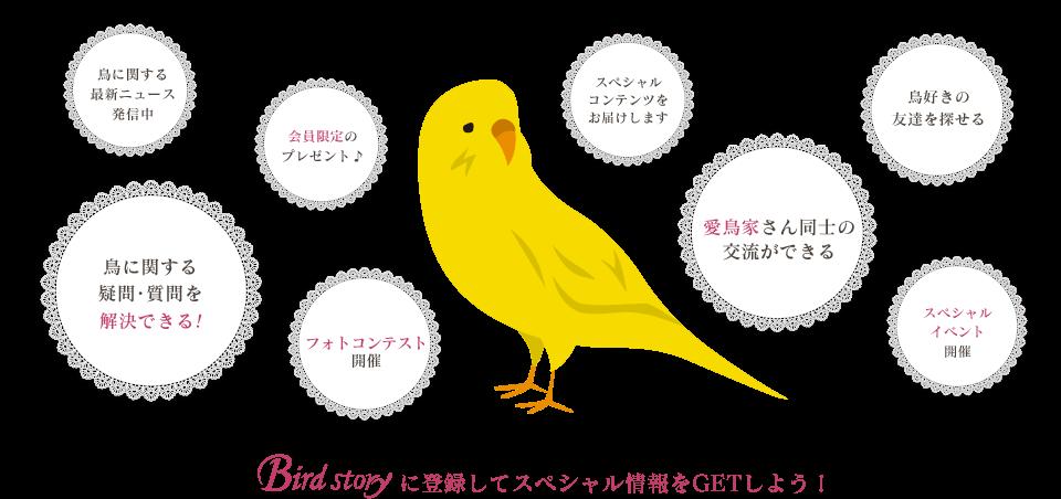 Birdstoryとは?