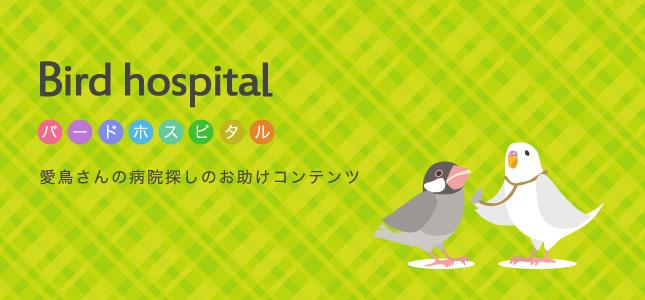 セキセイインコやオカメの小鳥診察できる病院紹介