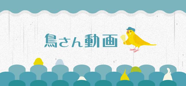 シロハラインコやキンカチョウ、文鳥などの動画紹介