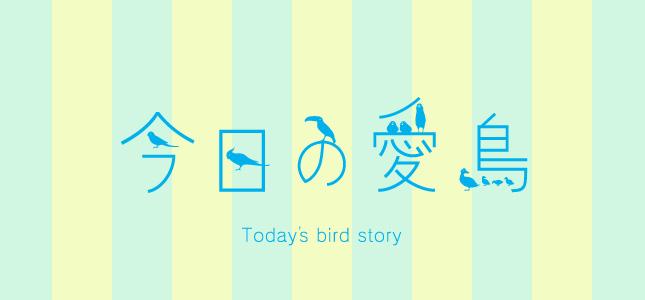 文鳥やオカメインコなどのペットの飼い鳥さん紹介