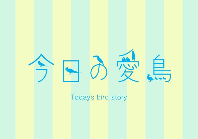 バードストーリー今日の愛鳥ペット