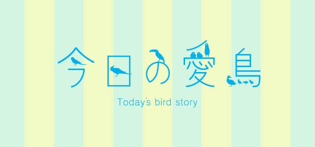 バードストーリー今日の愛鳥募集