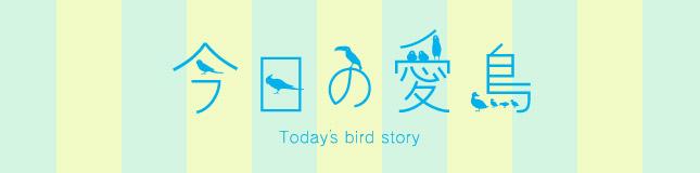 コンパニオンバード・飼い鳥さんの種類