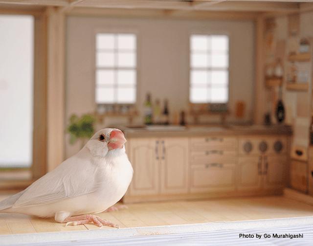 ピッコリアニマーリのシルバー文鳥さん