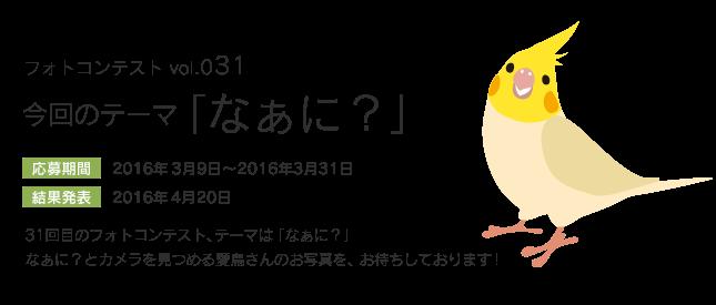 鳥フォトコンテストvol.031 テーマ「なぁに?」結果発表