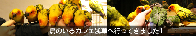 鳥のいるカフェ浅草レポート!