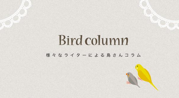 鳥さんライターによるBIRDCOLUMN バードコラム