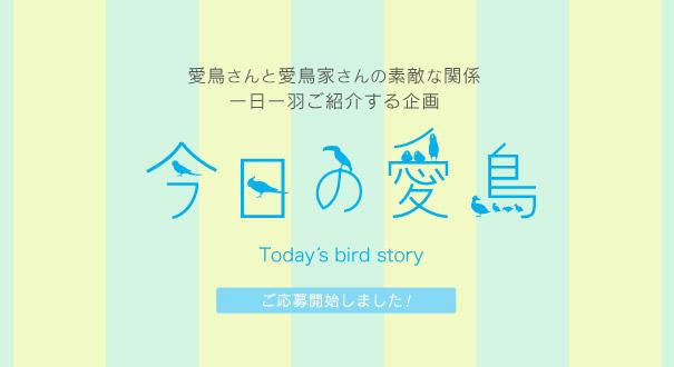 今日の愛鳥 飼い鳥の紹介