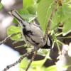 休日の朝は、のんびり野鳥観察!