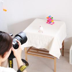 カメラマン宮本亜沙奈さんに愛鳥撮影をしていただきました♪