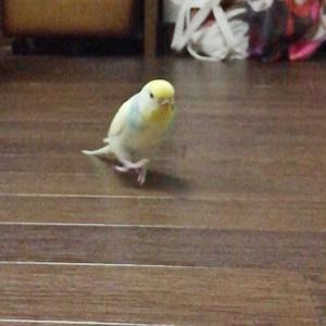 鳥フォトコンテスト「ぷー」さん