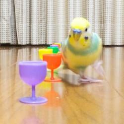鳥フォトコンテスト「ポリー」さん