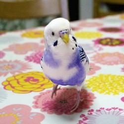 鳥フォトコンテスト「ピースケ」さん