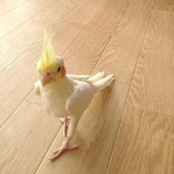 鳥フォトコンテスト「つむぎ」さん