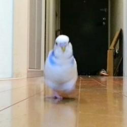 鳥フォトコンテスト「バーディー」さん