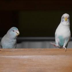 鳥フォトコンテスト「まろ・ちろ」さん