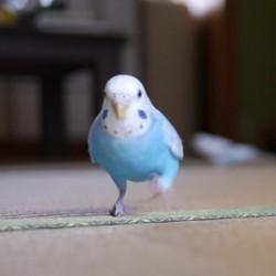 鳥フォトコンテスト「プル」さん