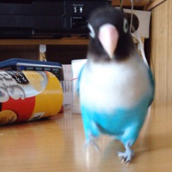 鳥フォトコンテスト「バタピー」さん