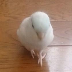 鳥フォトコンテスト「琥珀」さん