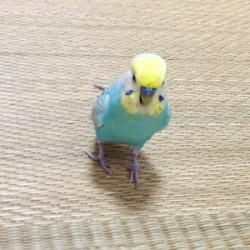鳥フォトコンテスト「バード」さん