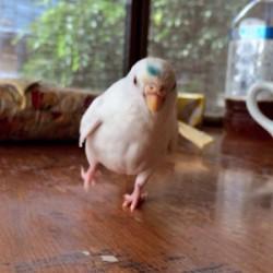 鳥フォトコンテスト「ハク」さん