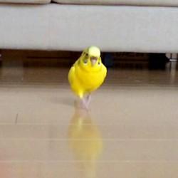 鳥フォトコンテスト「ポン」さん