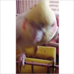 鳥フォトコンテスト「プー」さん