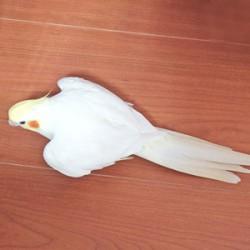 鳥フォトコンテスト「れい」さん