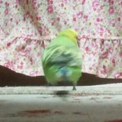 鳥フォトコンテスト「みどり」さん
