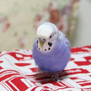 鳥フォトコンテスト「寿々」さん