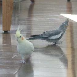 鳥フォトコンテスト「碧・霄」さん