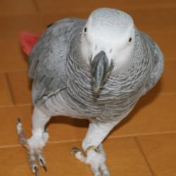 鳥フォトコンテスト「アイ」さん