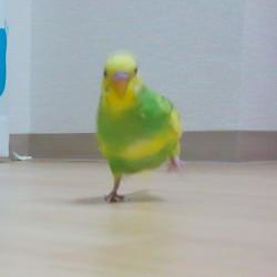 鳥フォトコンテスト「ポジ」さん