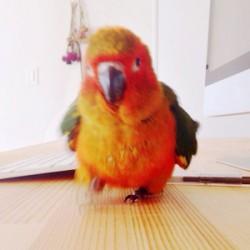 鳥フォトコンテスト「ココ」さん