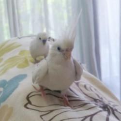 鳥フォトコンテスト「しろ・ぷー」さん