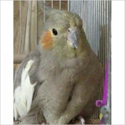 鳥フォトコンテスト「たわし」さん