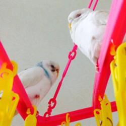 鳥フォトコンテスト「大福・コハク」さん