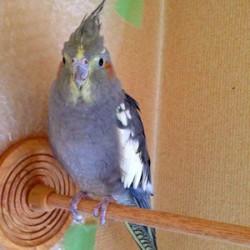 鳥フォトコンテスト「ペッコ」さん