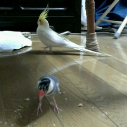 鳥フォトコンテスト「ビリー・ピー祐」さん