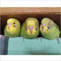 鳥フォトコンテスト「茶々・ぽぽ・まさき」さん