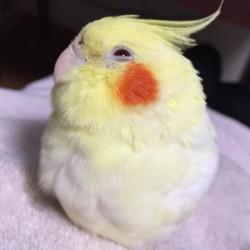 鳥フォトコンテスト「ぴろ」さん