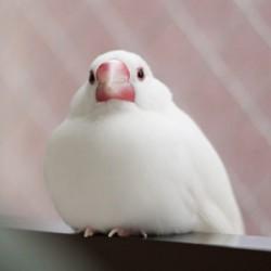 鳥フォトコンテスト「ちたん」さん