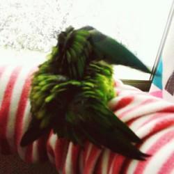 鳥フォトコンテスト「琴音」さん