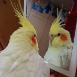 鳥フォトコンテスト「こと」さん