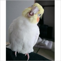 鳥フォトコンテスト「ビリー」さん