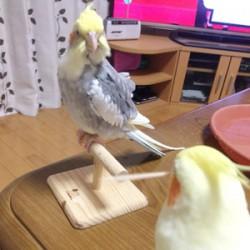 鳥フォトコンテスト「モカ・サク」さん