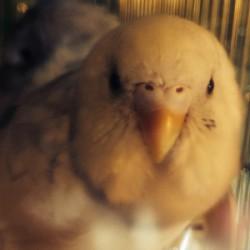 鳥フォトコンテスト「キッド」さん