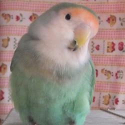 鳥フォトコンテスト「キュイ」さん