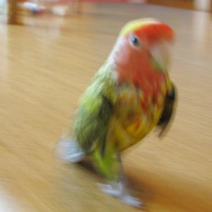 鳥フォトコンテスト「ちー」さん