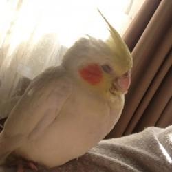 鳥フォトコンテスト「マッシュ」さん